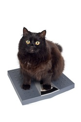 black cat on the scales